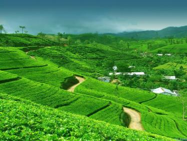 Nuwara-Eliya-Sri-Lanka