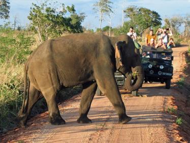 Udewalawa National Park